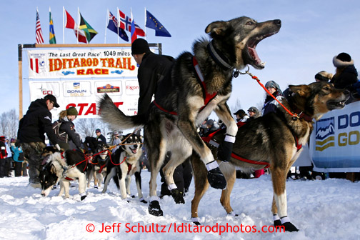 A Louie Ambrose dog leaps ready to leave from the start line during the restart on Willow lake during the Iditarod sled dog race Sunday, March 3, 2013.