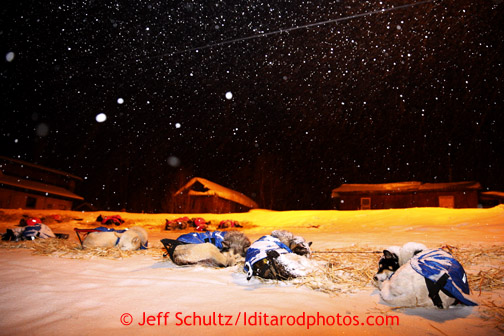 Mitch Seavey's team rests during a light snowfall at the Takotna checkpoint just before dawn on Wednesday March 6, 2013. Iditarod Sled Dog Race 2013 Photo by Jeff Schultz copyright 2013 DO NOT REPRODUCE WITHOUT PERMISSION