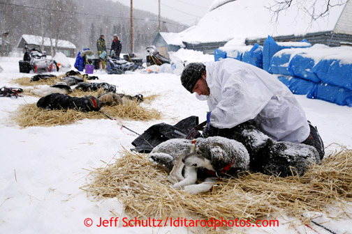 Brent Sass removes harnesses and puts jackest on his dogs at the Takotna checkpoint just before dawn on Wednesday March 6, 2013. Iditarod Sled Dog Race 2013 Photo by Jeff Schultz copyright 2013 DO NOT REPRODUCE WITHOUT PERMISSION