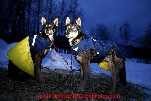 Linwood Fiedler dogs Hooch and Weasley at the Takotna checkpoint on Thursday March 7, 2013. Iditarod Sled Dog Race 2013 Photo by Jeff Schultz copyright 2013 DO NOT REPRODUCE WITHOUT PERMISSION