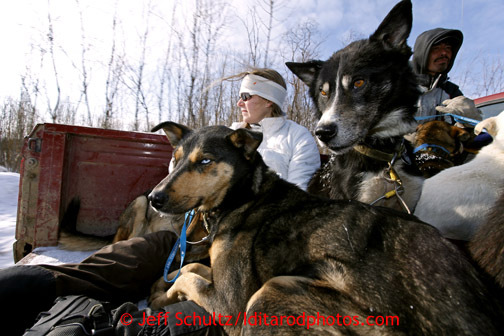 Veterinarian Julie Kittams holds onto dropped dogs in the back of a pickup truck as it heads to the Shageluk airport Saturday March 9, 2013. Iditarod Sled Dog Race 2013 Photo by Jeff Schultz copyright 2013 DO NOT REPRODUCE WITHOUT PERMISSION