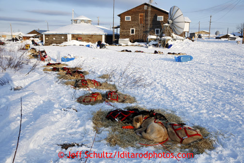 Jake Berkowitz's dogs sleep and rest together with other teams at the Kaltag checkpoint on Saturday March 9, 2013. Iditarod Sled Dog Race 2013 Photo by Jeff Schultz copyright 2013 DO NOT REPRODUCE WITHOUT PERMISSION