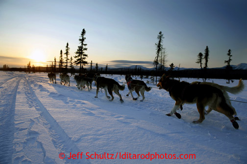 Aily Zirkle drives her dogs into the setting sun a couple miles after leaving the Kaltag checkpoint on Saturday March 9, 2013. Iditarod Sled Dog Race 2013 Photo by Jeff Schultz copyright 2013 DO NOT REPRODUCE WITHOUT PERMISSION