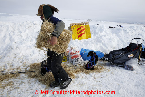 Sonny Lindner distributes straw to his resting dogs at the Unalakleet checkpoint on Sunday March 10, 2013. Iditarod Sled Dog Race 2013 Photo by Jeff Schultz copyright 2013 DO NOT REPRODUCE WITHOUT PERMISSION