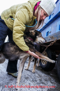 Julie Kittams of Big Lake, Alaska, checks on Karin Hendrickson's dog, Aberdeen, at the annual Iditarod Vet Check at the race's headquarters in Wasilla, Alaska, on Wednesday, February 26, 2014.