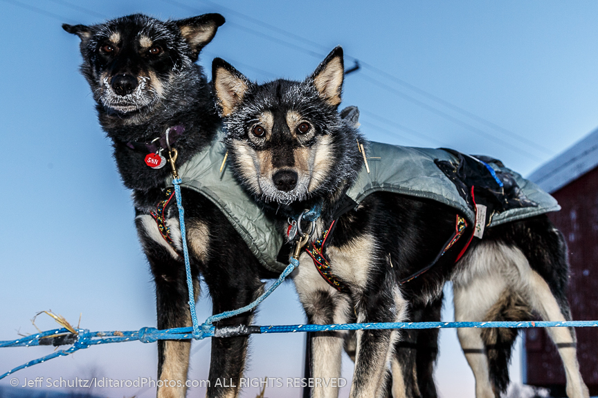 Paige Drobny dogs Gypsy and ShadyGrove are ready to head dow the trail in the morning on Thursday March 12, 2015 at the Ruby checkpoint during Iditarod 2015. (C) Jeff Schultz/SchultzPhoto.com - ALL RIGHTS RESERVED  DUPLICATION  PROHIBITED  WITHOUT  PERMISSION
