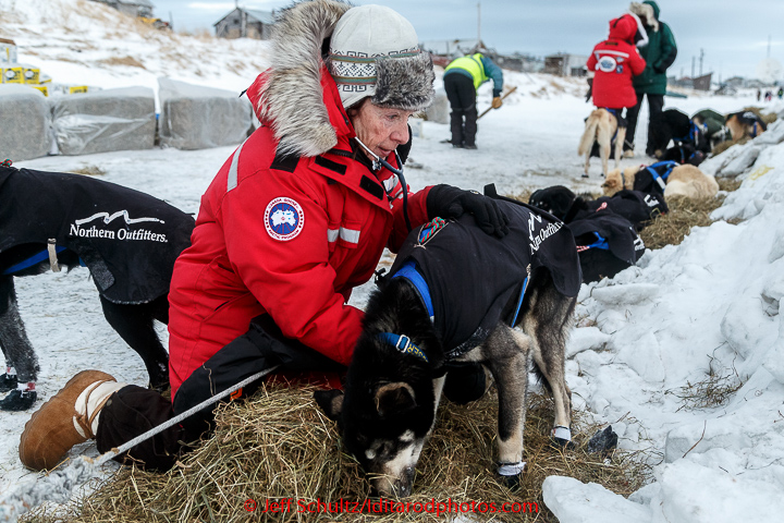 Volunteer veterinarian Debbie Hadlock examines a Martin Buser dog shortly after his arrival at the Unalakleet checkpoint in the morning on Monday March 16, 2015 during Iditarod 2015.   (C) Jeff Schultz/SchultzPhoto.com - ALL RIGHTS RESERVED  DUPLICATION  PROHIBITED  WITHOUT  PERMISSION