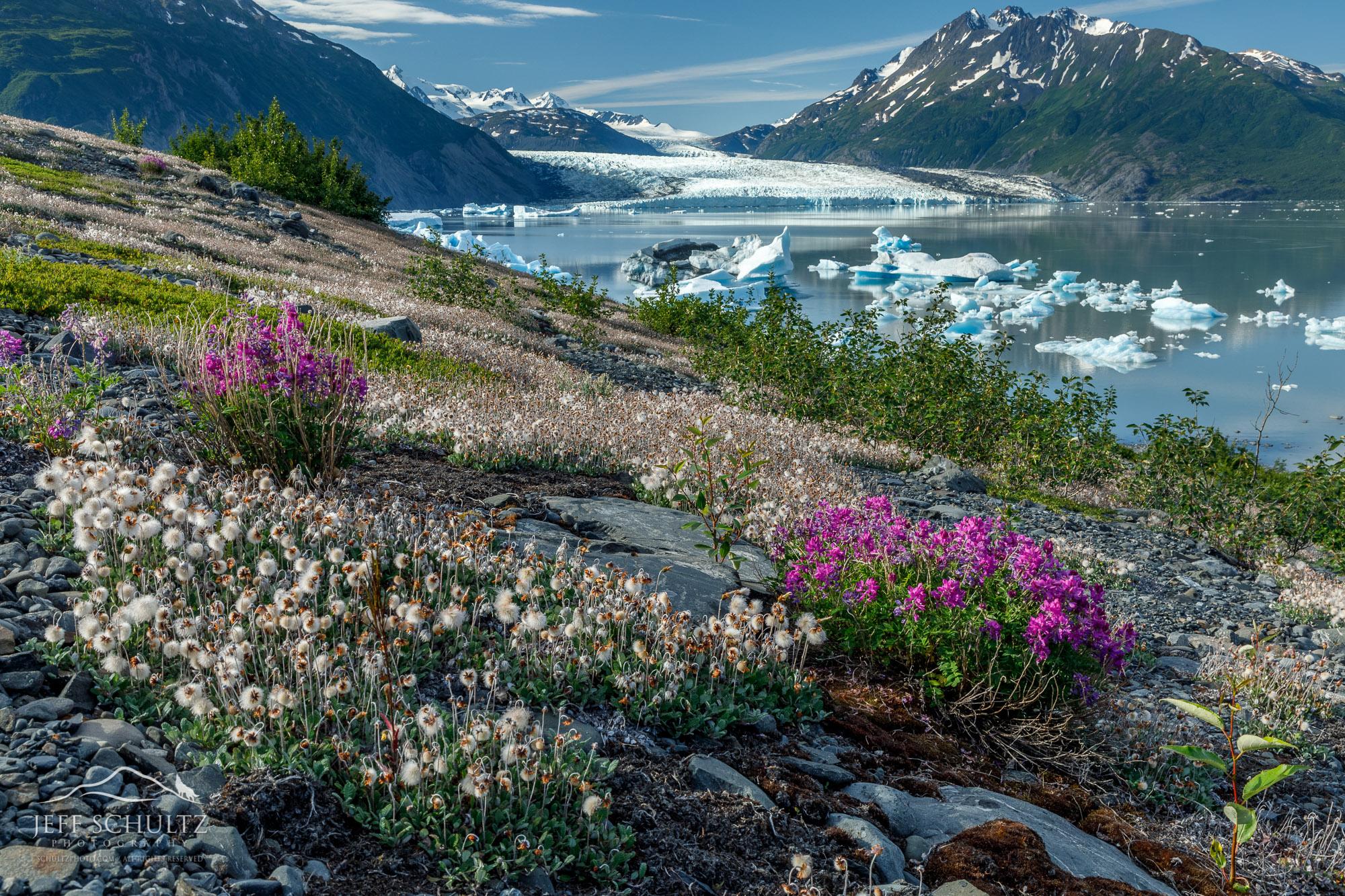 Alaska Nature & Landscapes Photographer | Jeff Schultz ...