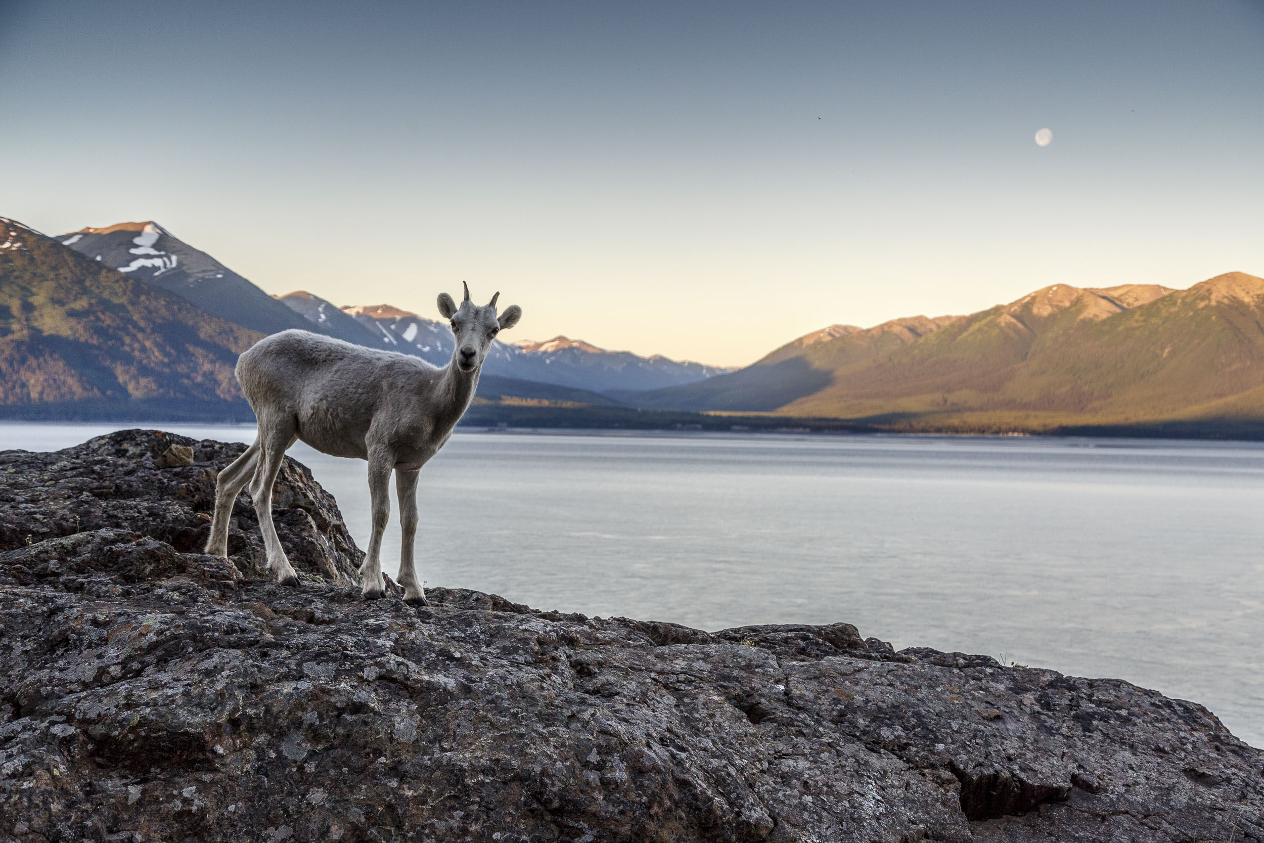 Monthly Calendar Book : Alaska wildlife photography jeff schultz