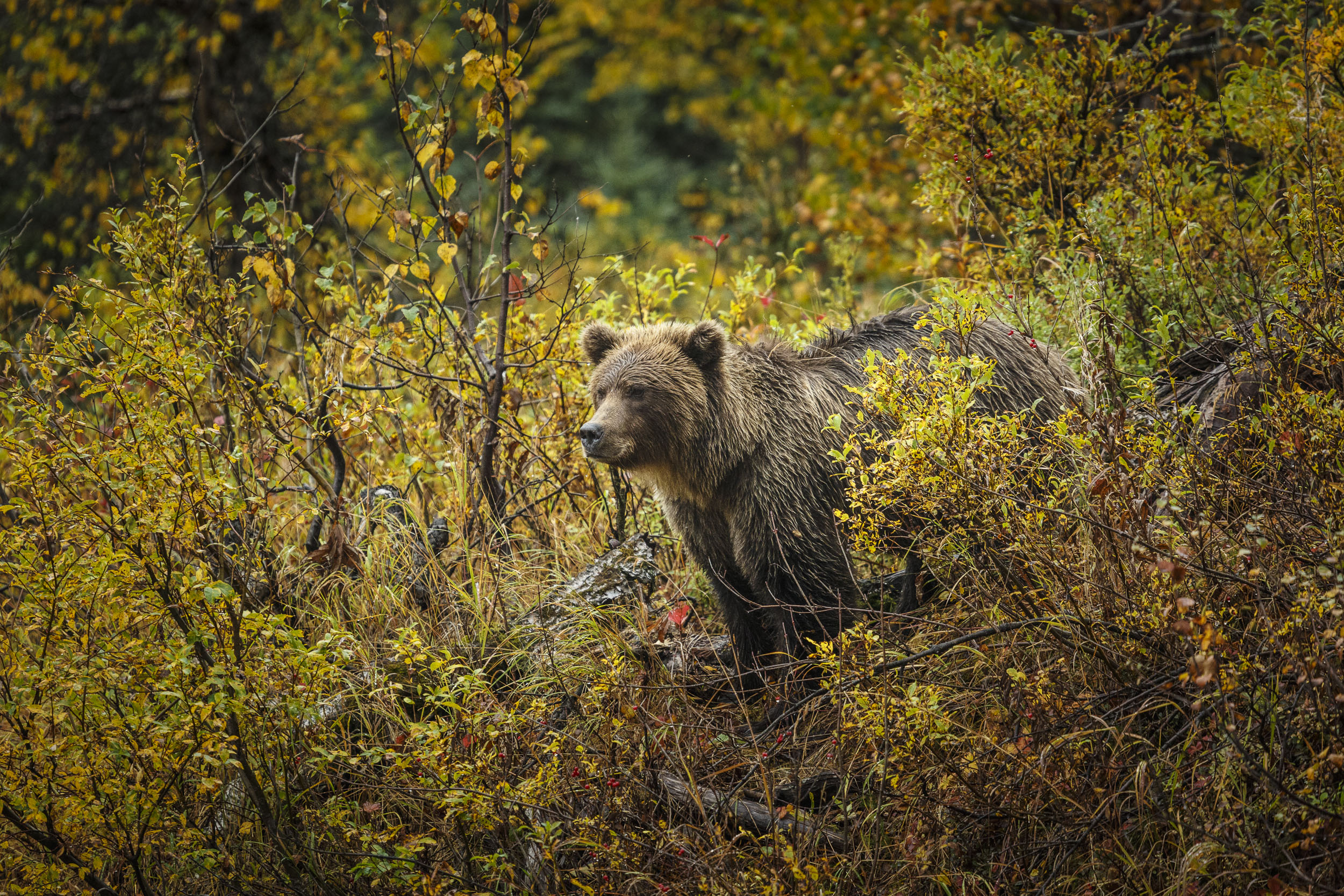 alaska wildlife photography