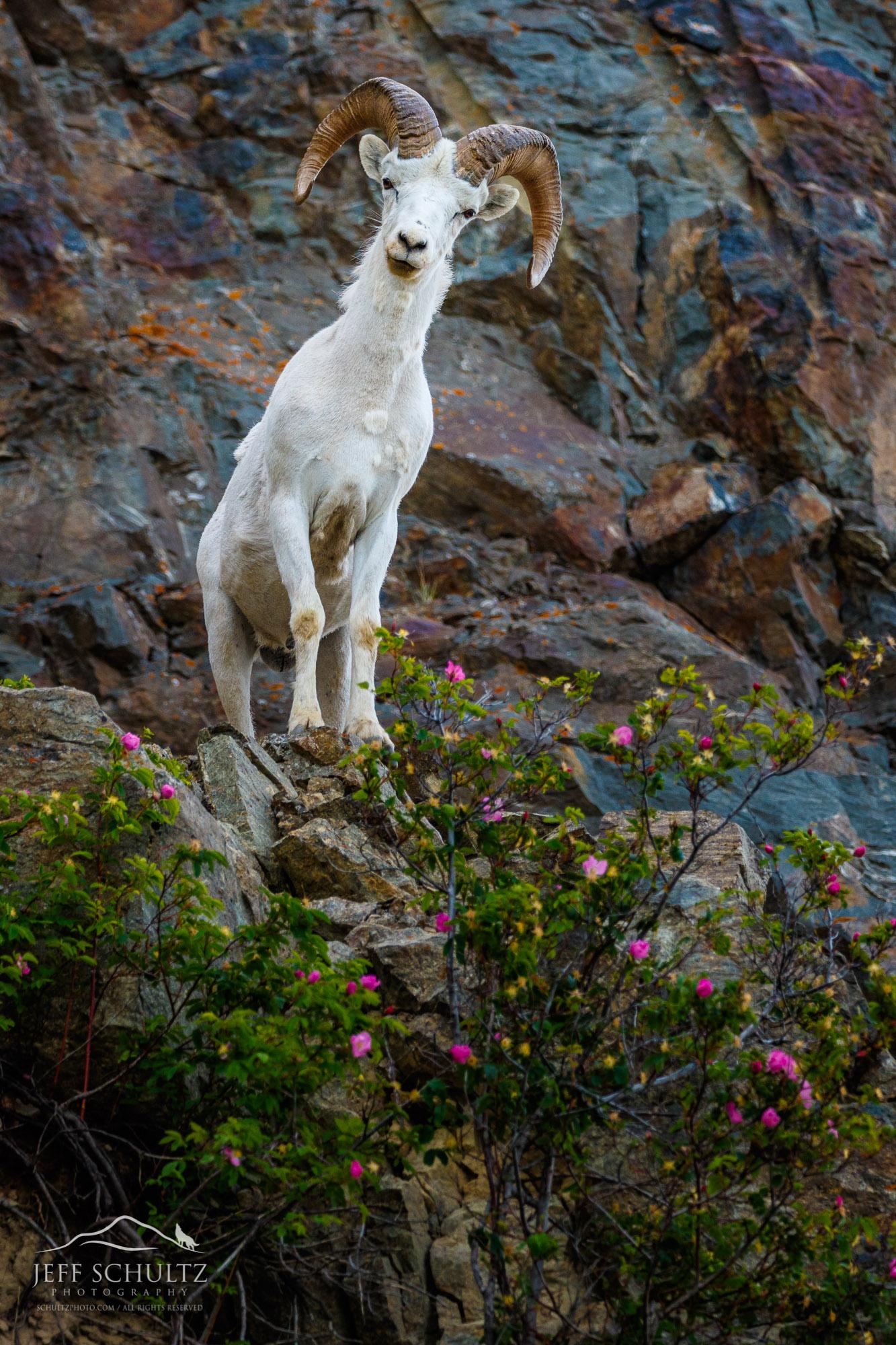 alaska wildlife photography