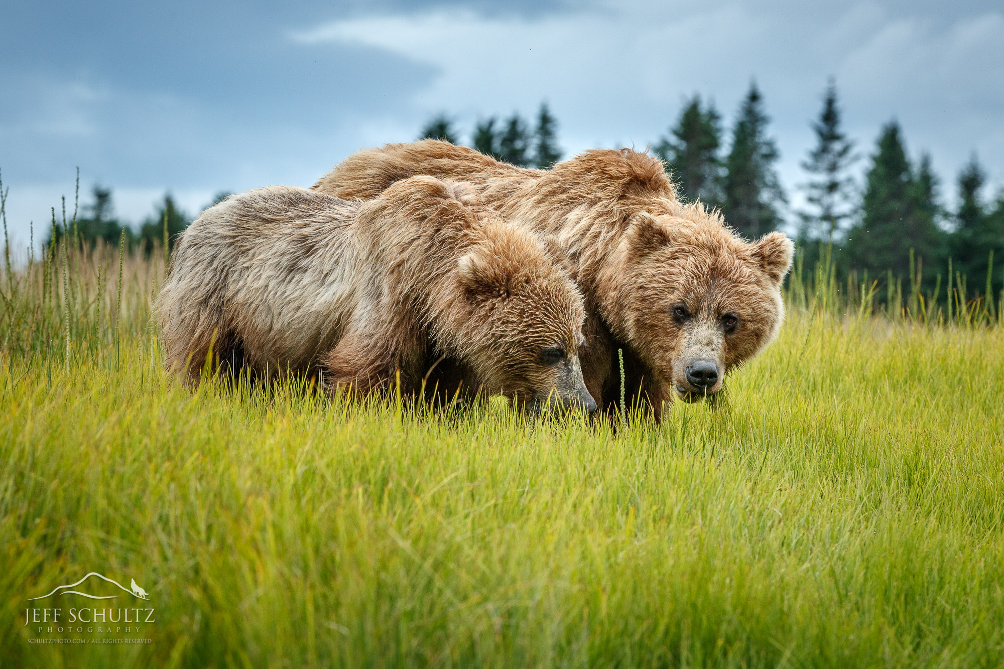Alaska Wildlife Photography - Jeff Schultz