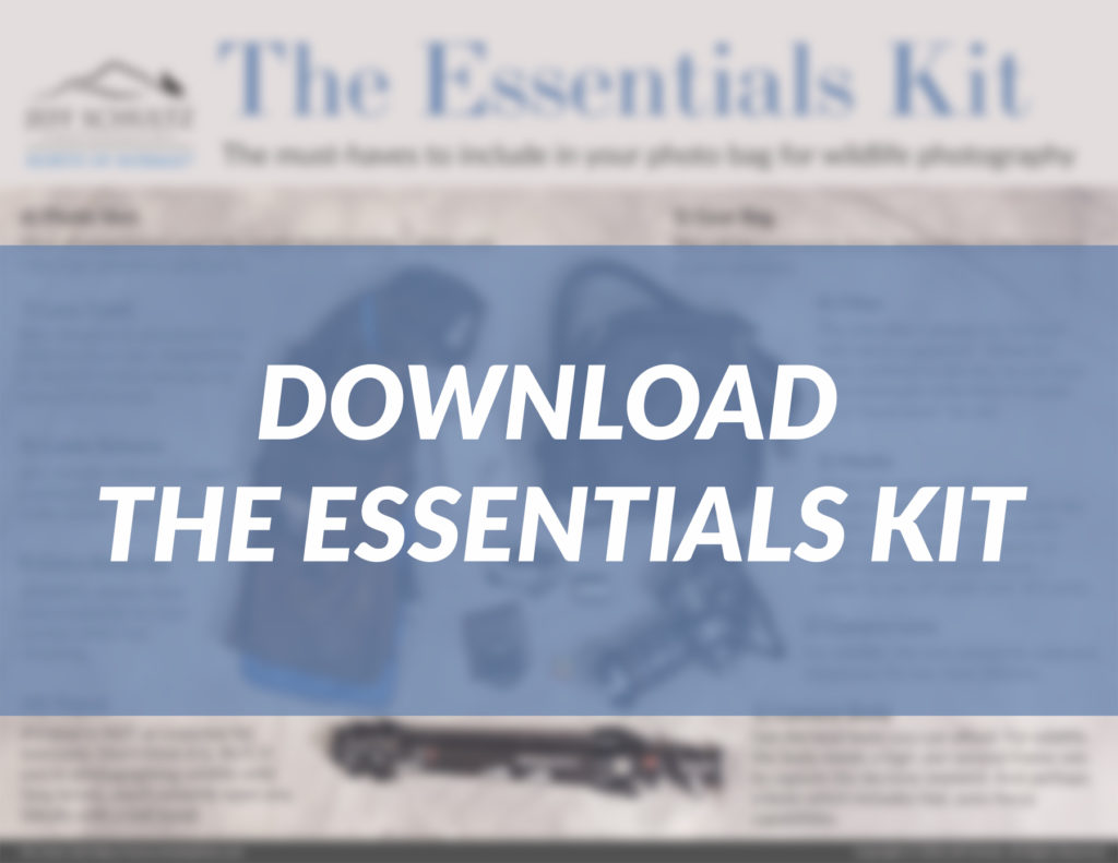 The Essentials Kit for Wildlife and Nature Photographers